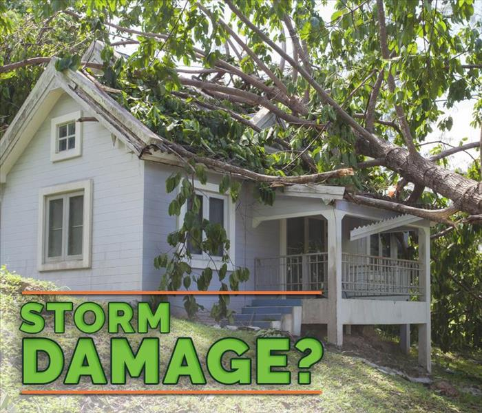 "home with trees and branches lining the ground with green words in front ""Storm Damage"""